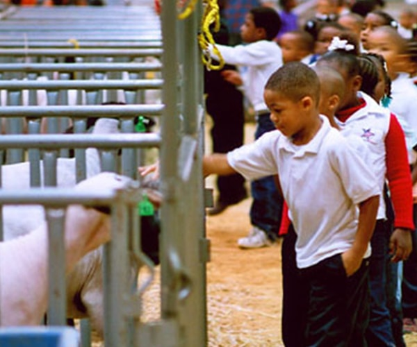 Kids pet farm animals